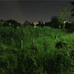 夜に池にいる謎のおじさんの正体